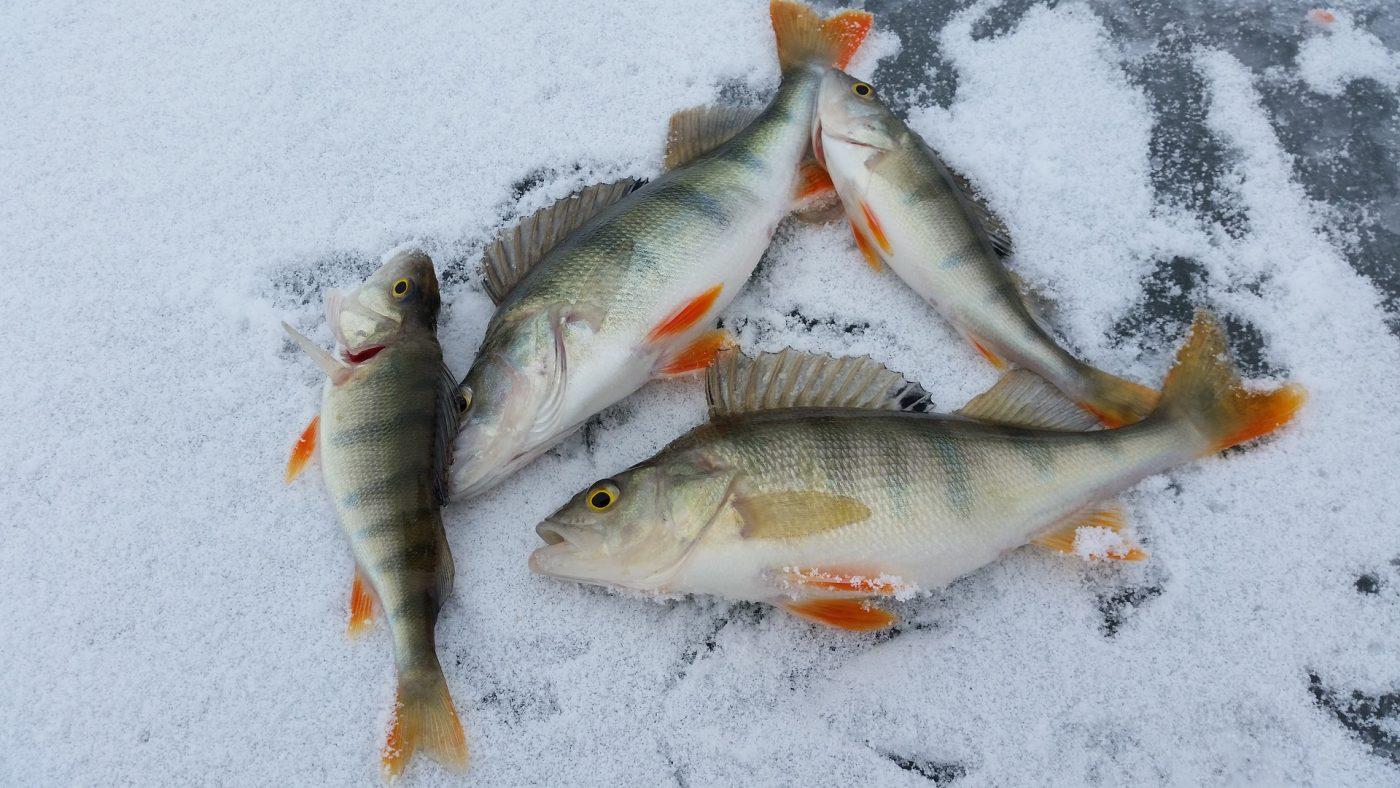Ice Fishing 2919070 1920.jpg