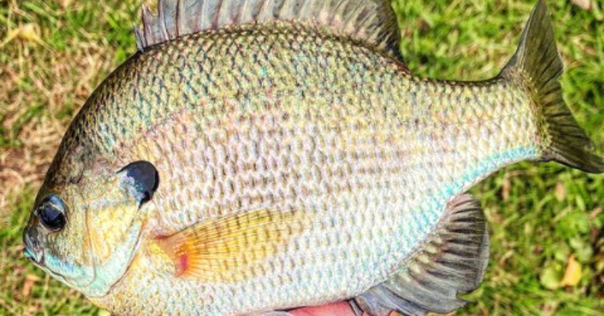 spring fishing panfish tips.jpg