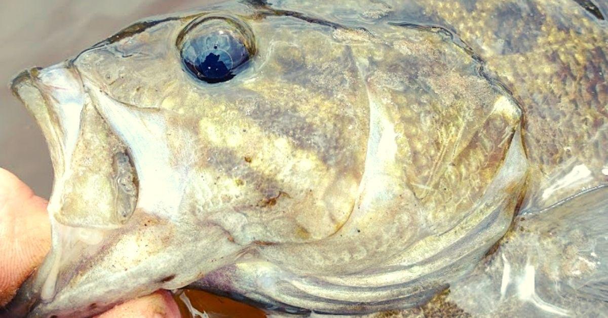 smallmouth bass.jpg